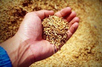 Pirinçteki KDV Oranı Yüzde 1